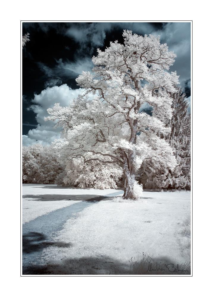 Mein Lieblingsbaum im Kurpark