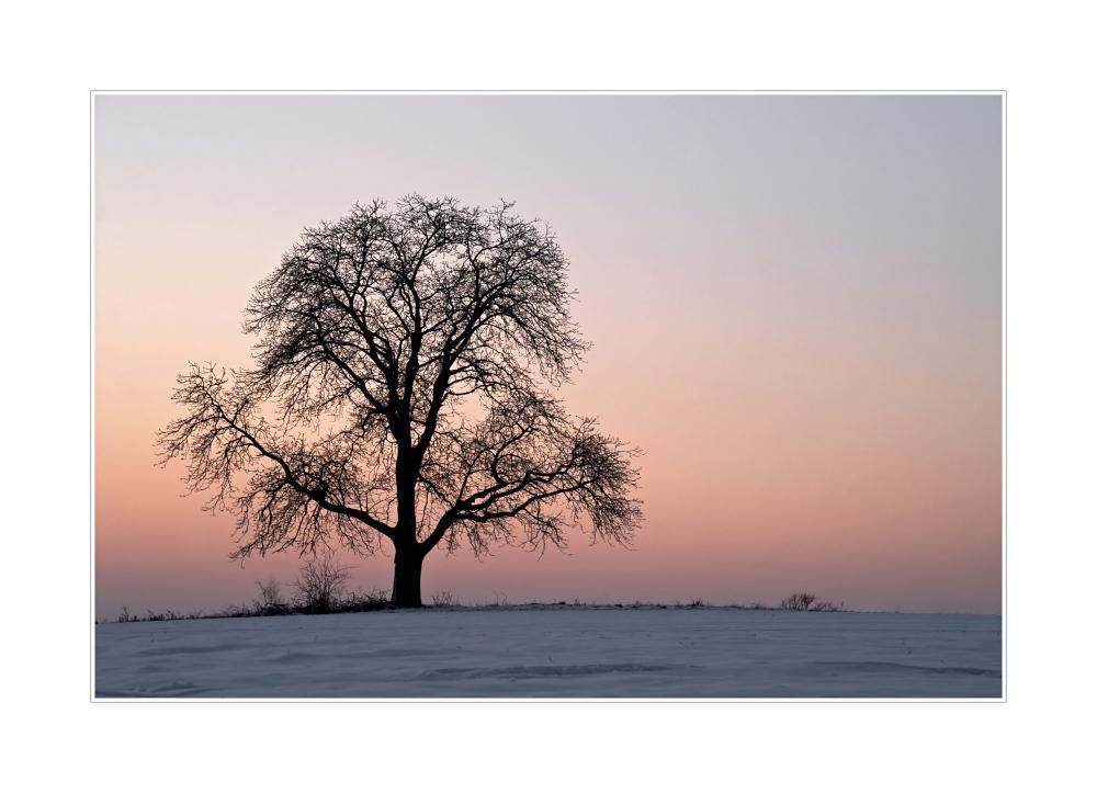 Mein Lieblingsbaum im Winter II