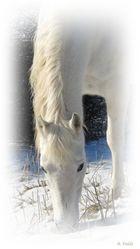 Mein Lieblingspferd im Winterpelz