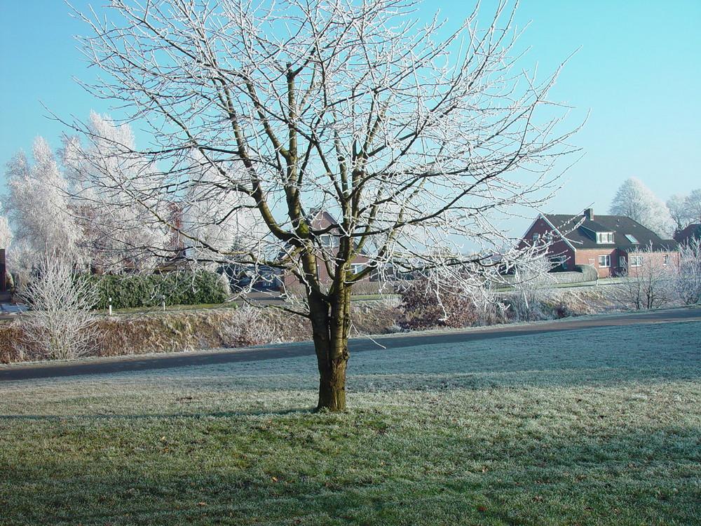 Mein liebster Baum im Winter