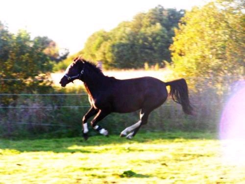 mein liebstes pferd