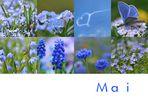 Mein Mai ist blau