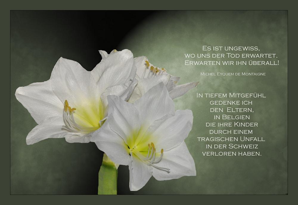 mein Mitgefühl Foto & Bild | trauerkarten, trauer, *glück