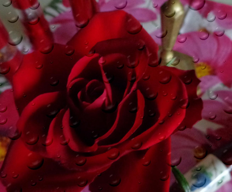 Mein Mittwochblümchen für Euch !