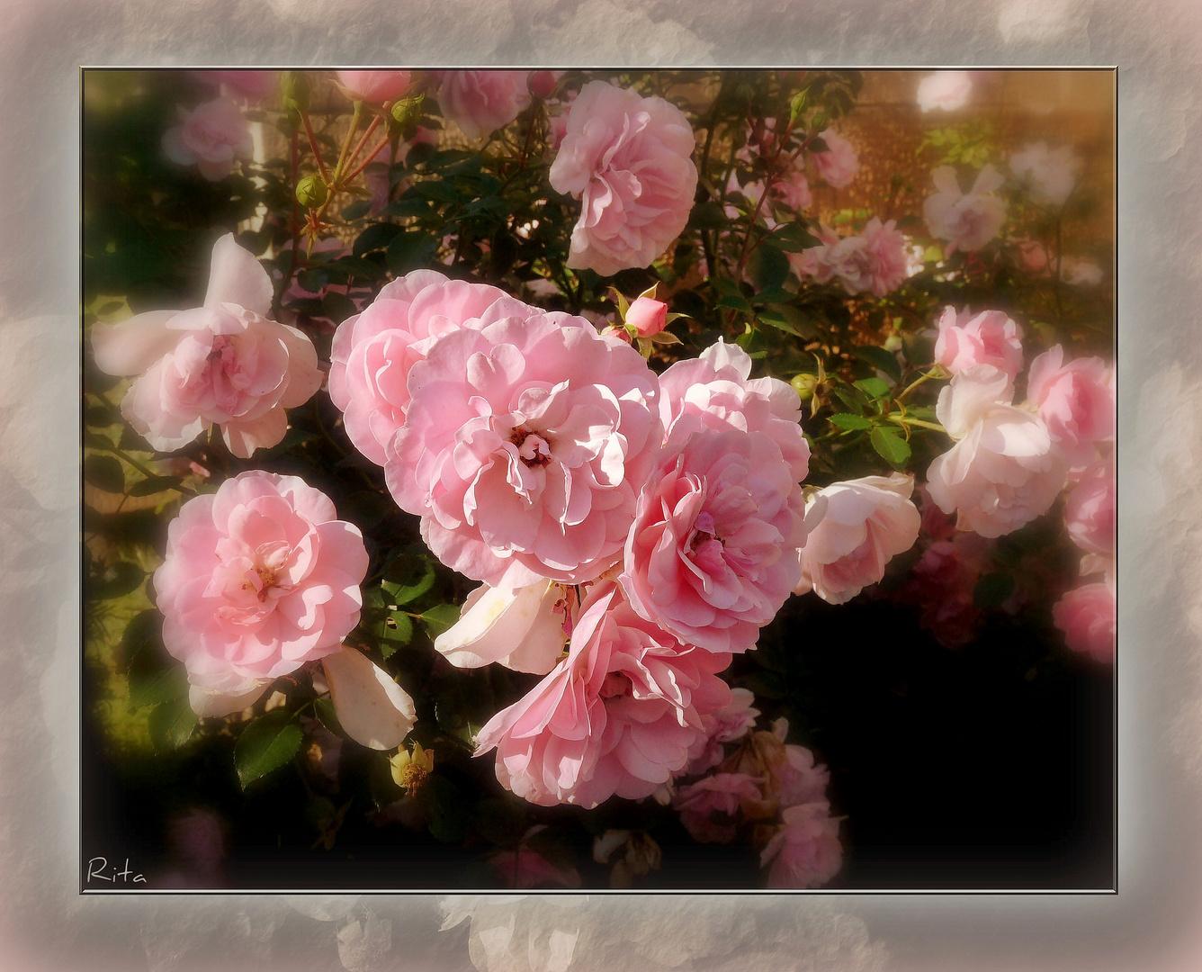 mein Mittwochsblümchen...