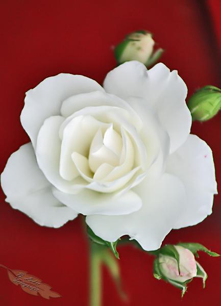 Mein Mittwochsblümchen