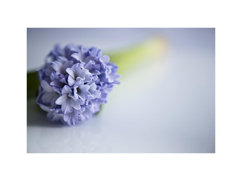 Mein Mittwochsblümchen.....
