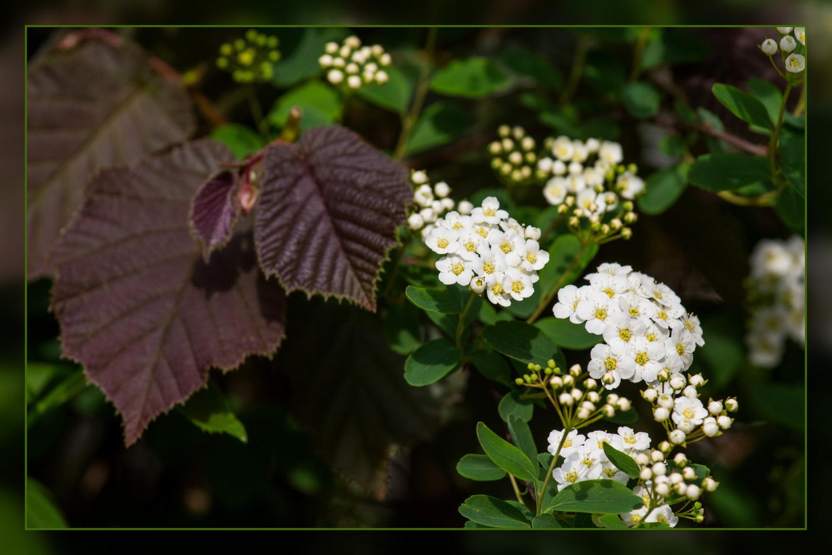 Mein Mittwochsblumchen