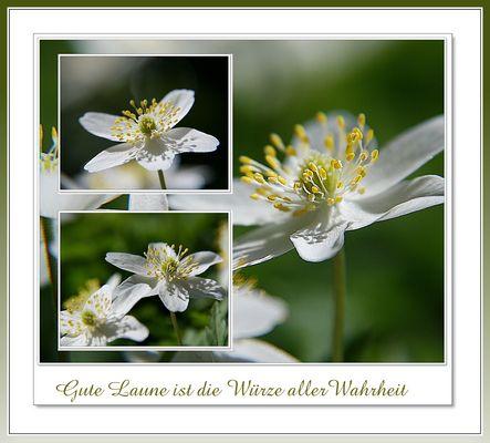 """Mein Monatsbeitrag """" Weiss"""""""