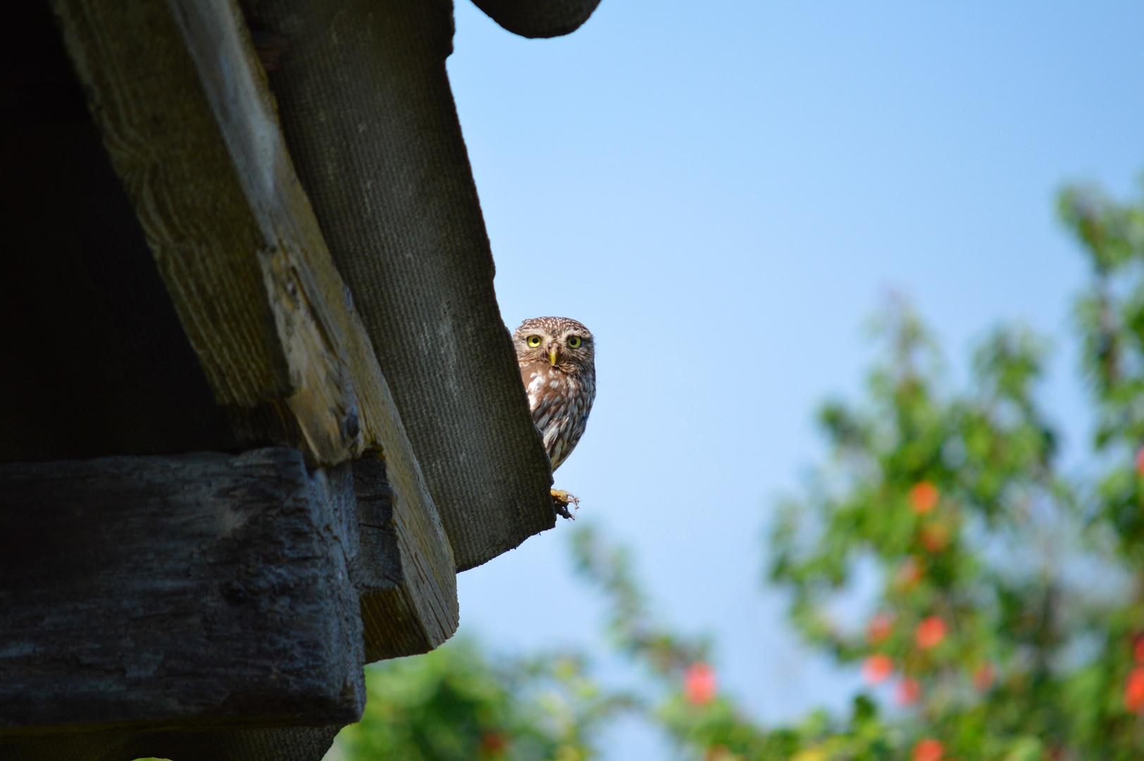 Mein Nachbar!
