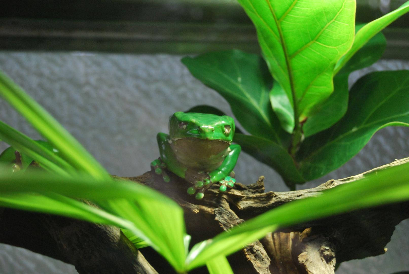 """Mein Name ist """"Frosch der Grüne"""""""
