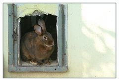 Mein Name ist Hase....