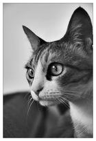 Mein Name: Katze
