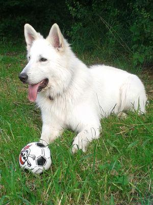 Mein neuer Ball