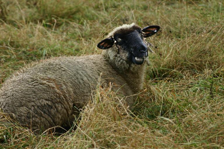 Mein neuer Job, den ganzen Tag im Gras liegen