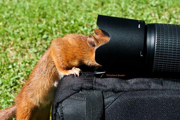 Mein neuer Kameraassistent