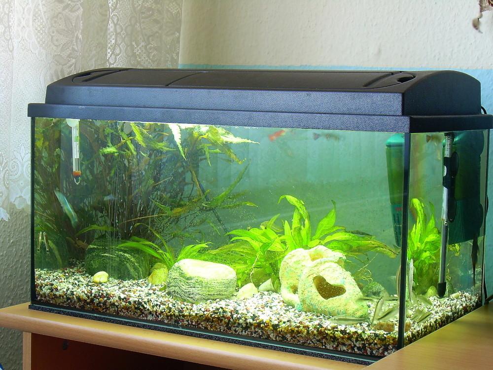 Mein neues Aquarium ..
