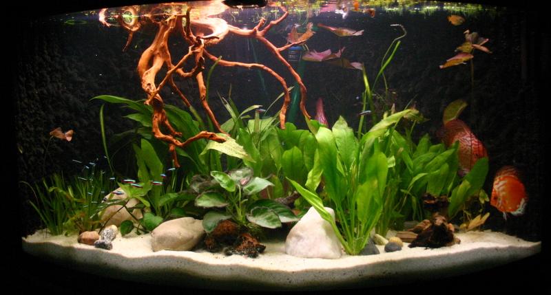 mein neues gebrauchtes 350l aquarium foto bild tiere haustiere aquaristik bilder auf. Black Bedroom Furniture Sets. Home Design Ideas
