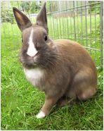 Mein neues Kaninchen Maxi
