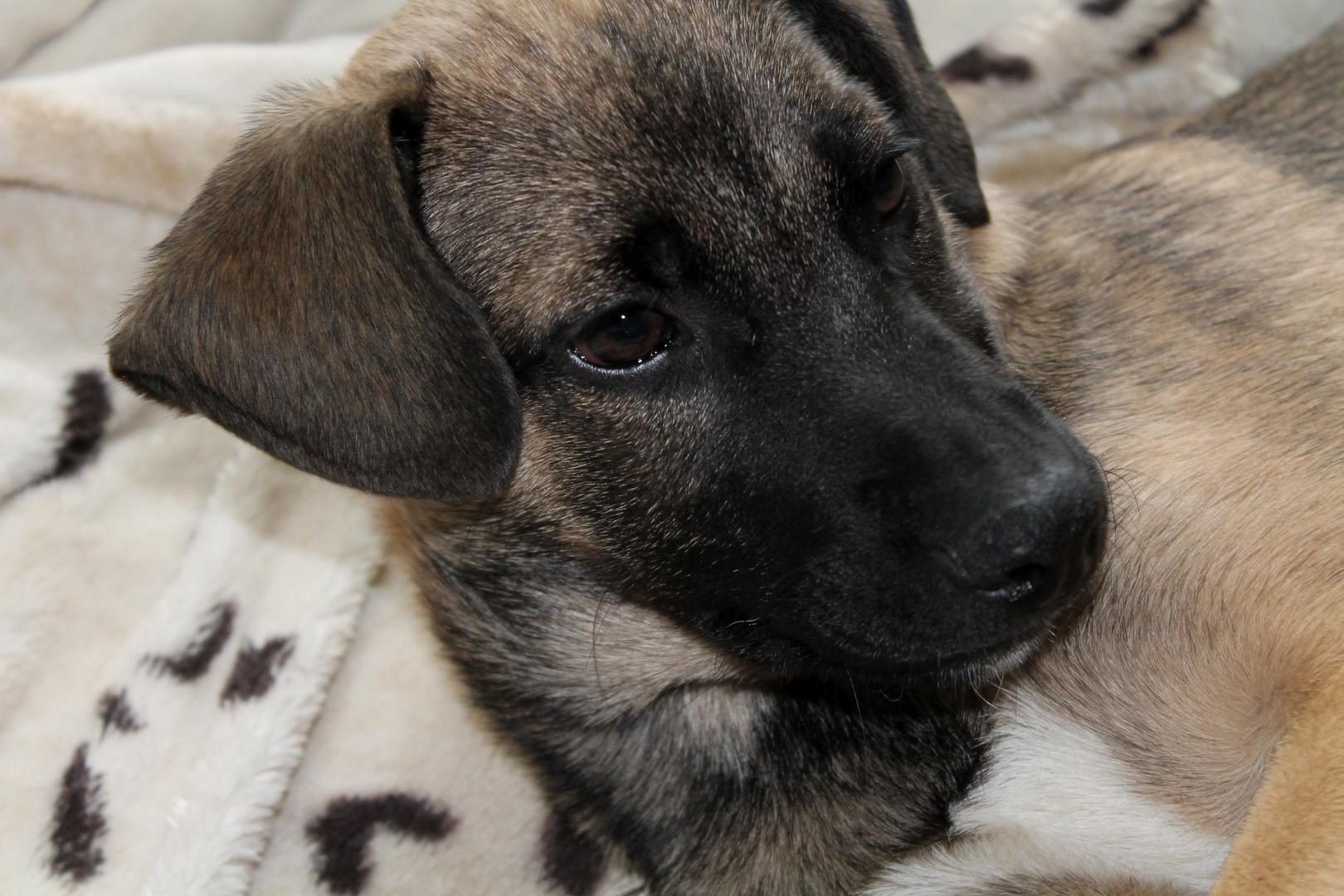mein neuester Pflegehund Filou :)
