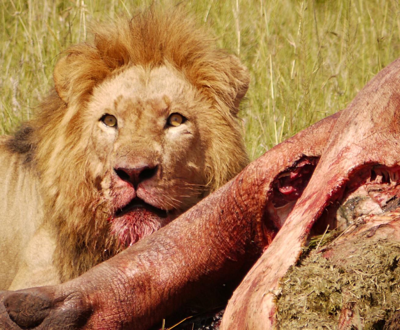 Mein Nilpferd ! - In der Massai Mara