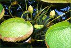 Mein Oldenburg ... der Botanische Garten 2