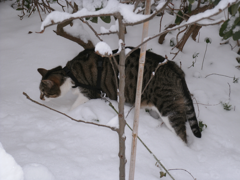 """mein Peaches könnte glatt """"ABC die Katze lief im Schnee"""" singen"""