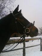 mein Pferd. :)