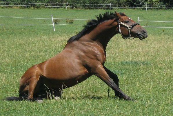 Mein Pferd beim Frühsport