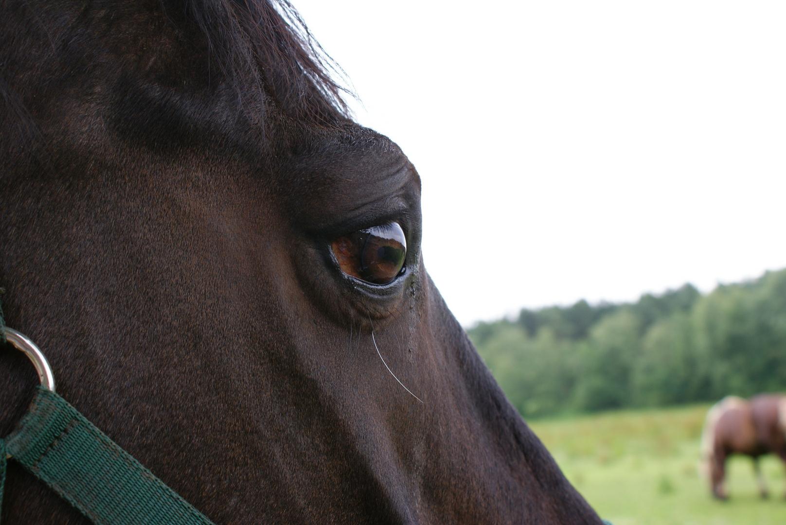 Mein Pferd Brian A