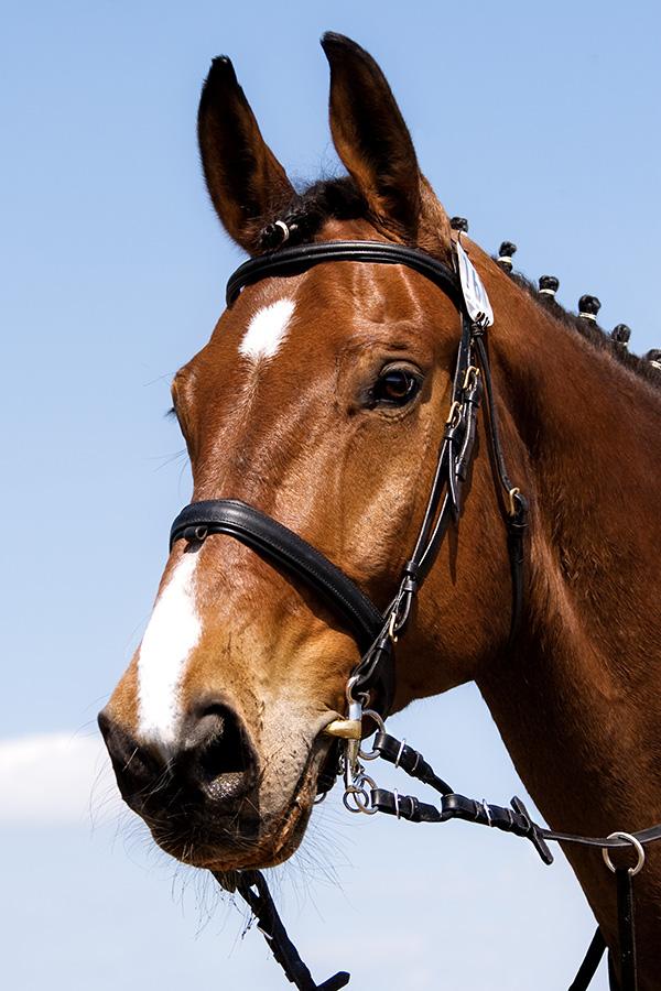 Mein Pferd ~ Fernando