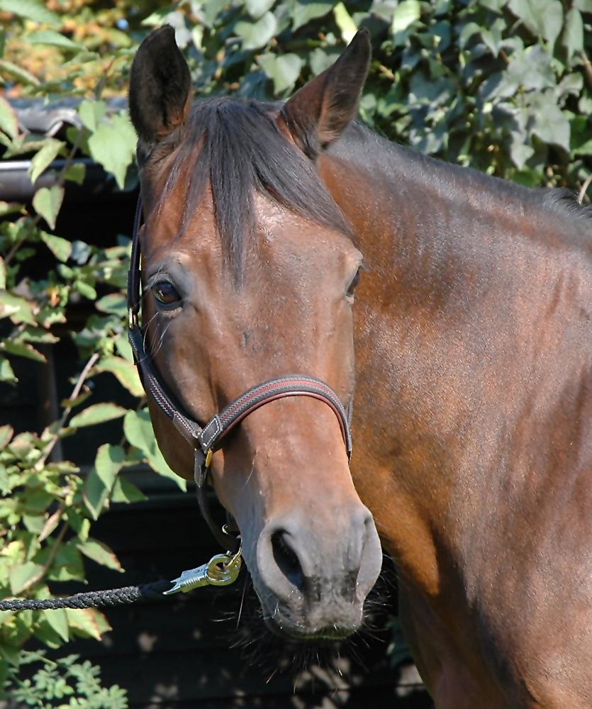 Mein Pferd Hugo...