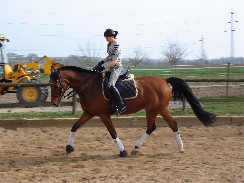 Mein Pferdchen