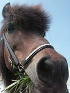 Mein Pony <3