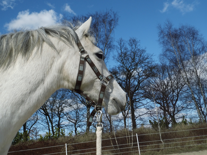 Mein Pony :)