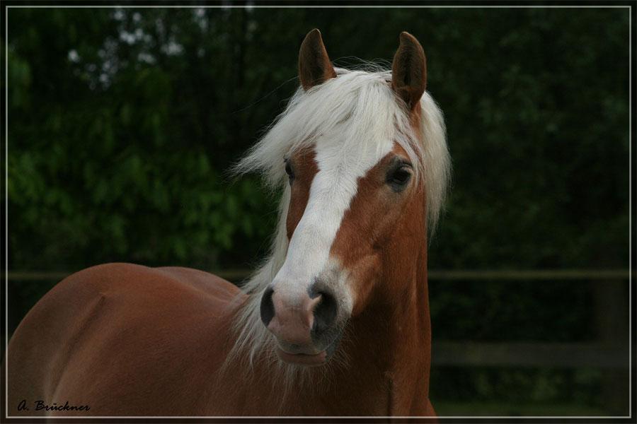Mein Pony...