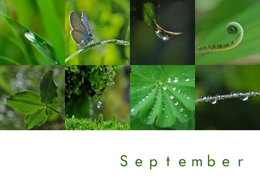 Mein September ist grün