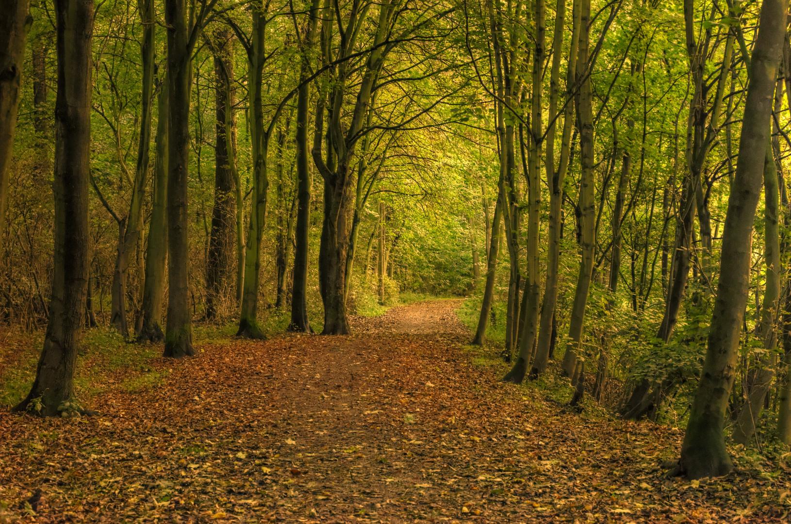 mein sherwood forest