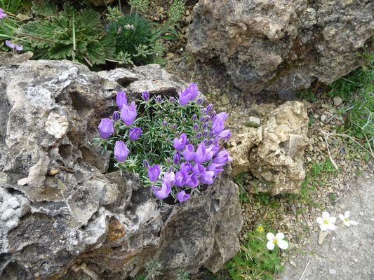 mein Steingarten