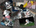 Mein süßestes aller Doggenbabys