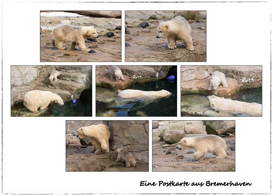 (M)ein Tag im Zoo