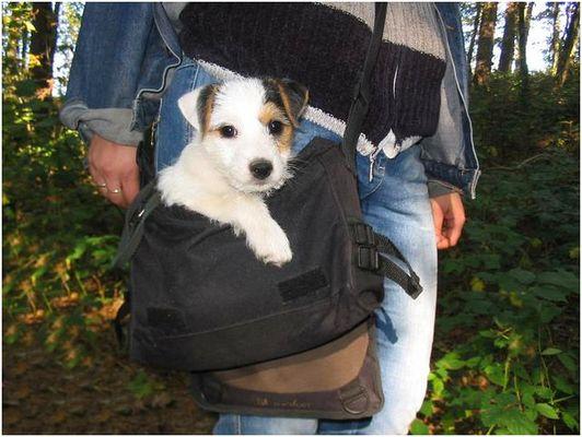 Mein Taschenhund
