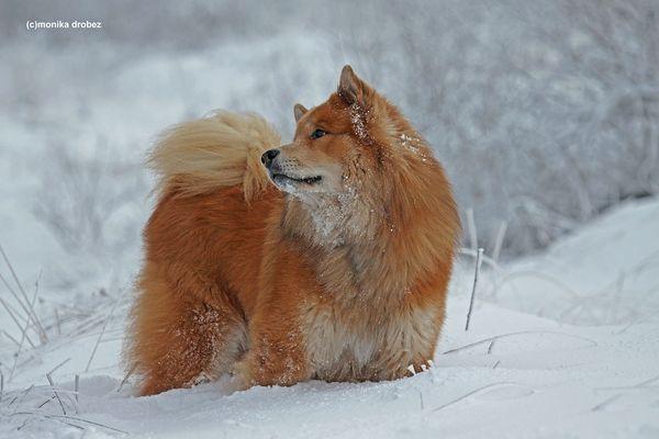 ...mein Traumhund...