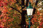 Mein Tribut an den Herbst
