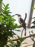 Mein Vögelchen...*pfeiff*