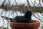 Mein Vogel des Jahres 2012 - Rang 4