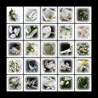 *mein weißer Garten*