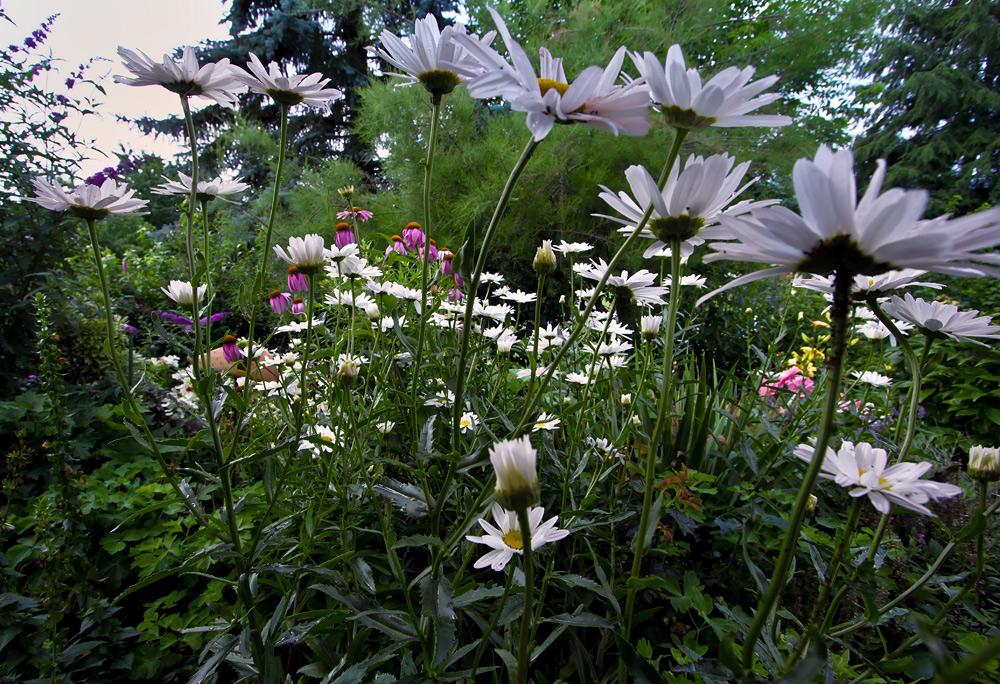 mein wilder garten 3 foto bild landschaft garten parklandschaften flora bilder auf. Black Bedroom Furniture Sets. Home Design Ideas