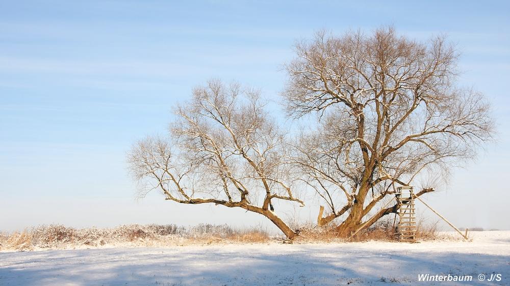 """""""Mein"""" Winterbaum"""