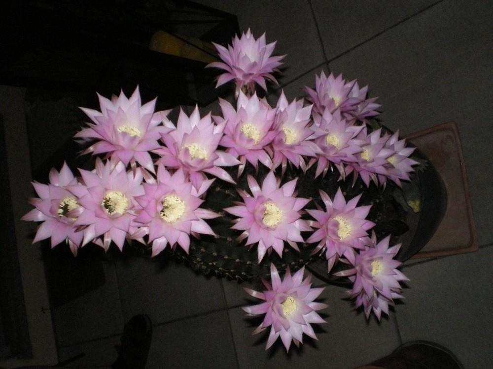 mein wunderbarer Kaktus